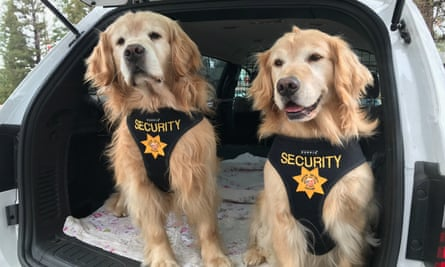 Mitzi and Mikey, deputy mayors in charge of security for Mayor Max.