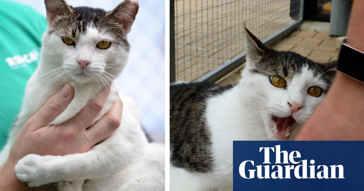 Australia's grumpy cat: shelter staff bent on finding 'demonic' Chester a home