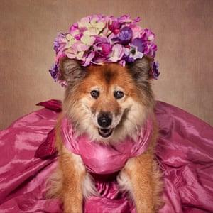 Precious, a nine-year-old collie-elkhound mix
