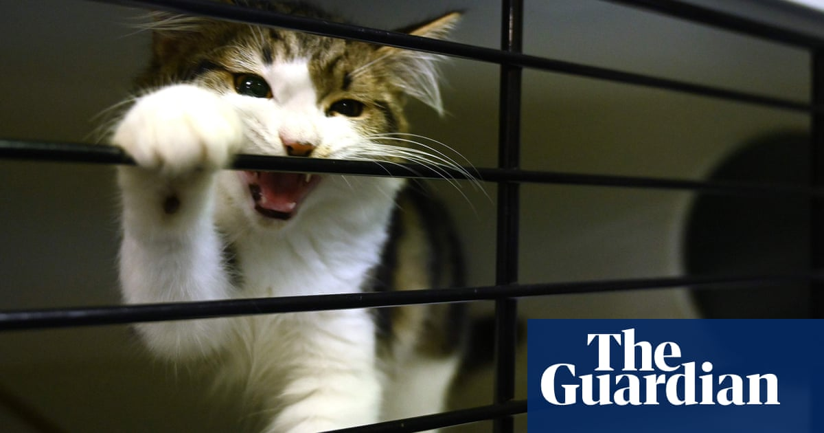 Keep pet cats indoors, say researchers who found they kill 230m native Australian animals each year