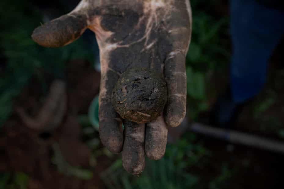Arnott holds a ball of fresh biodynamic cow manure that will be used to fertilise soil.