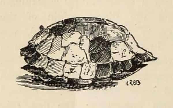 Archbishop William Laud's tortoise