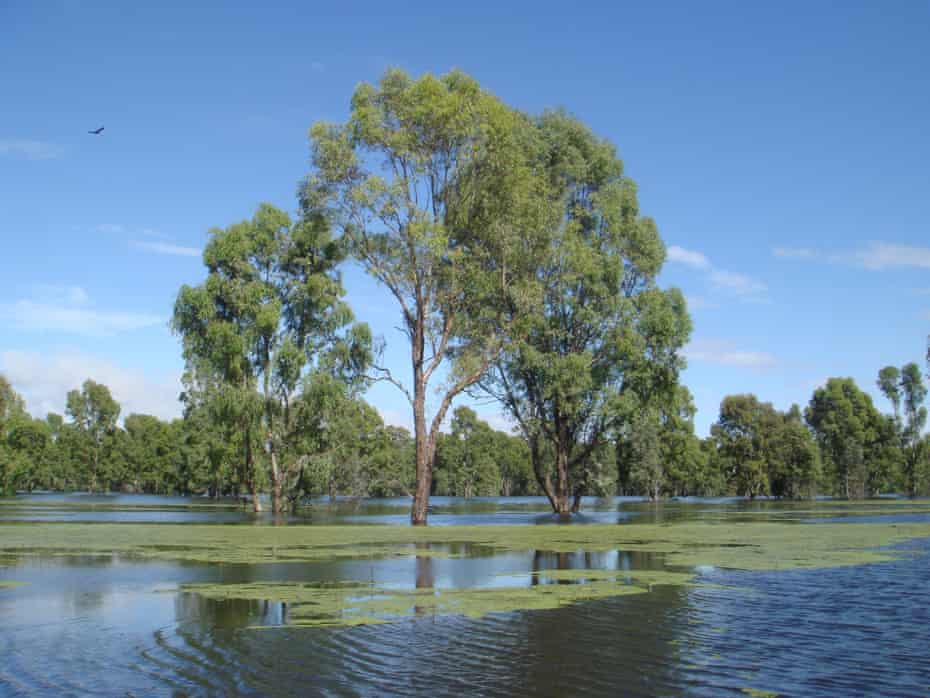 There has been a push to de-gazette the Murray Valley national park in New South Wales
