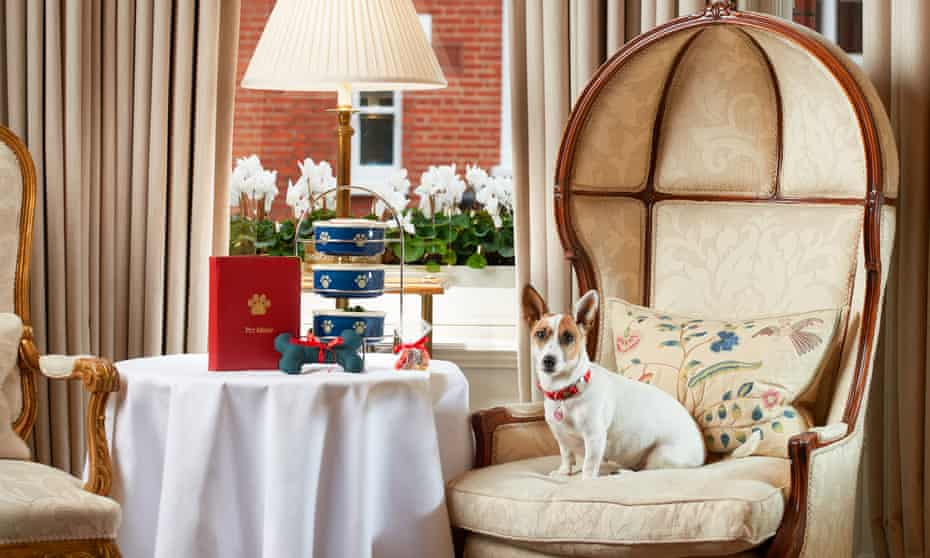 What's on the pet menu? From liver brownies to pupcakes… eat your fill at the Egerton House Hotel