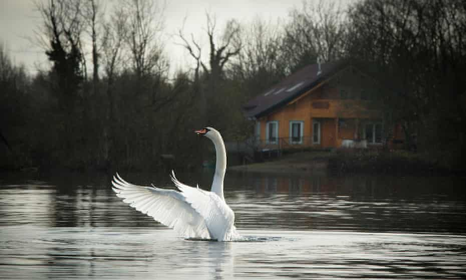 The lakes are a haven for birds