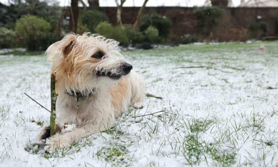 Boris Johnson's dog, Dilyn, in garden of 10 Downing Street