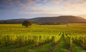 Green and pleasant: first light over Denbies wine estate in Surrey.