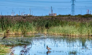 Works and water … RSPB Saltholme nature reserve in the Tees valley.