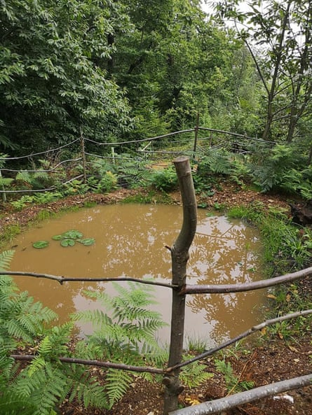 Introducing ponds to woodland areas can help bring new wildlife to the area.
