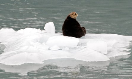 seal climate change