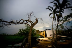 Ducks perch on the branch of a tree next to a home destroyed by Hurricane Maria in Toa Baja, Puerto Rico.