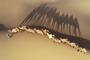 Alxa League, China: herders lead camels as they walk in the Badain Jaran desert