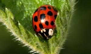 Ladybirds are great pest predators.