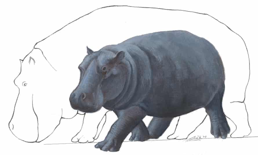 A reconstruction of the Cretan fossil dwarf hippo Hippopotamus creutzburgi against a silhouette of a normal-sized hippo.