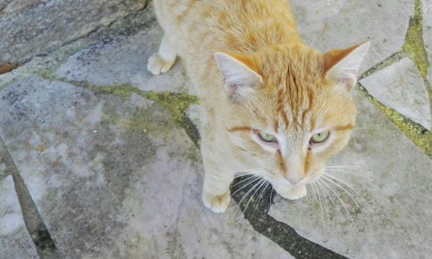 I adopted a stray cat  I had no idea what I was letting
