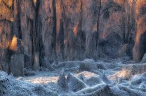 Landscapes category winner: Il bosco incantato by Stanislao Basileo (Italy) Frost along the river Po, Italy