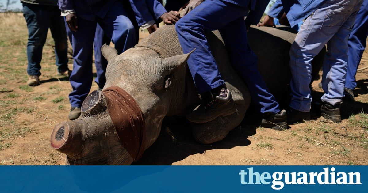 Horn Trimming Rhinos In South Africa In Pictures Art And - Local authorities cut down this mans 30 year old tree and his revenge is genius