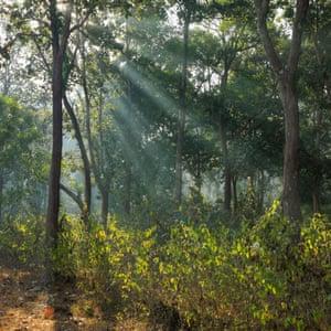 The forest in Chhattisgarh