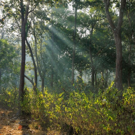 The forest in Chhattisgarh