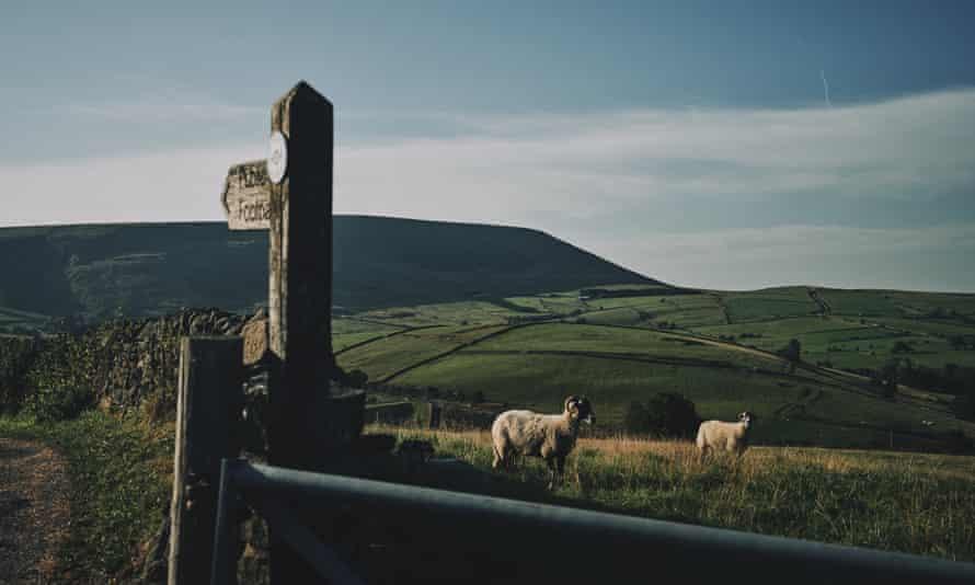 Sheep in a field near a public footpath sign near Highham, Lancashire, UK