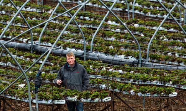 Scottish fruit farmers recruit thousands of locals to save harvest
