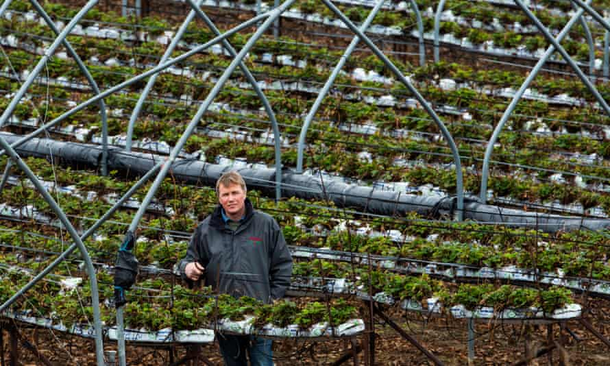 James Porter at his fruit farm in Scryne, Angus.