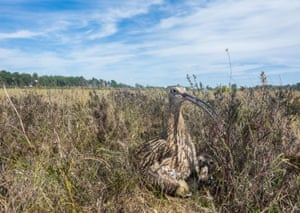 The return of two young curlew to Lough Neagh, born at the County Armagh site last year, has raised hopes for the dwindling population. The species is monitored as one of Northern Ireland's most endangered, having declined by 85% since 1985