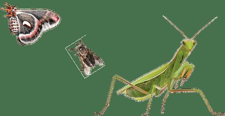 Moth, fly, praying mantis