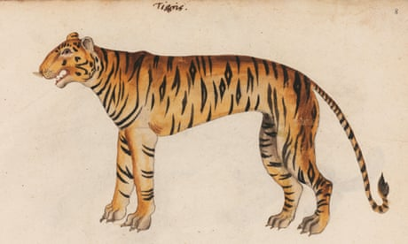 16th century 'zoological goldmine' discovered – in pictures