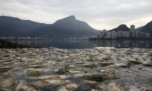 Dead fish floating in the Rodrigo de Freitas lagoon, where the rowing and canoeing competitions will be held, in 2015.
