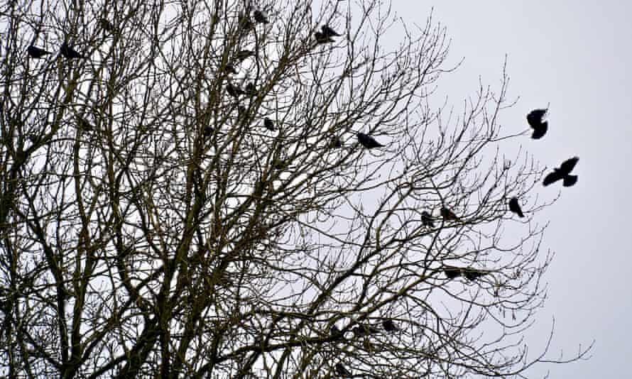 Birds sheltering in a tree