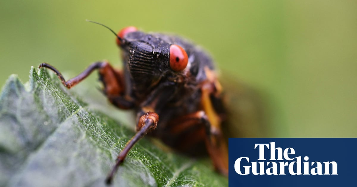 Sex-mad and spectacular: 17 incredible facts about cicadas