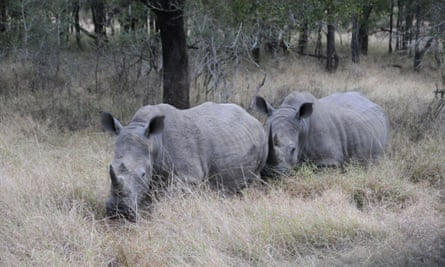 Swaziland said the sale to the traditional medicine markets of the far east would generate $9.9m, which would be used to protect the tiny landlocked country's 73 white rhinos from poaching.