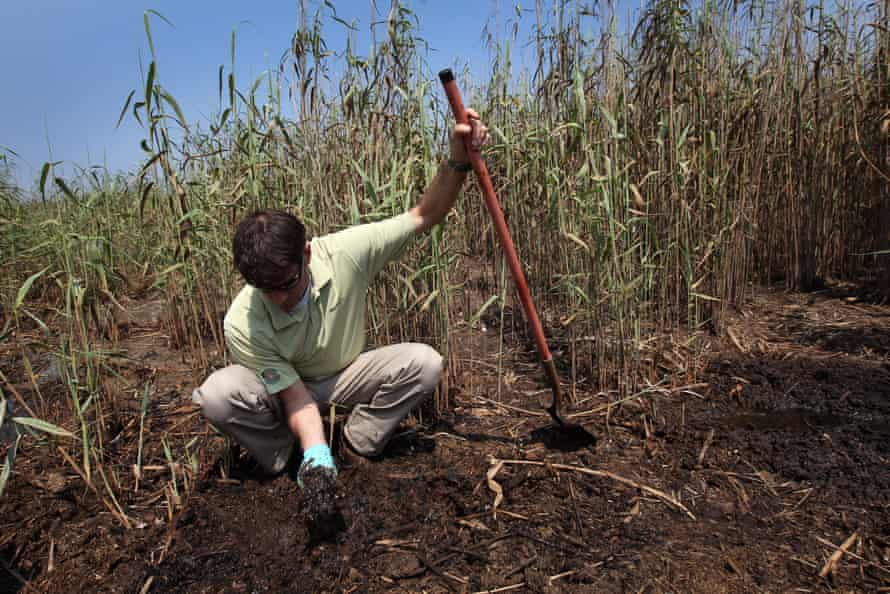 Garret Graves diggs up oiled soil in a coastal marsh after the BP oil spill in 2011.