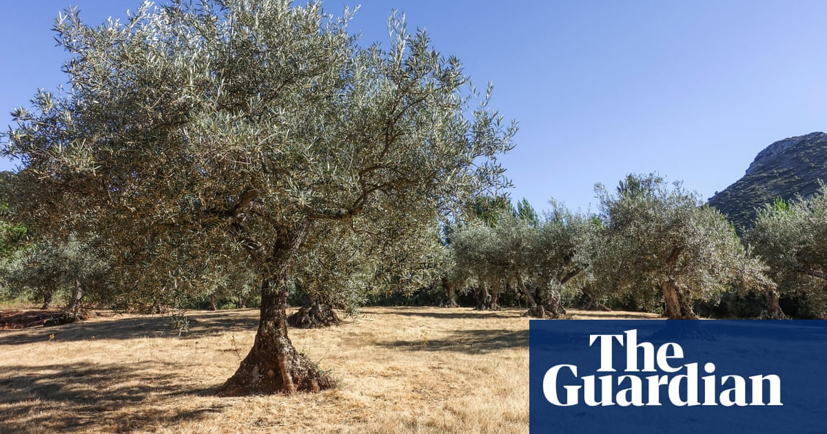 Century-old olive trees felled as Spain's farmers try to cut costs