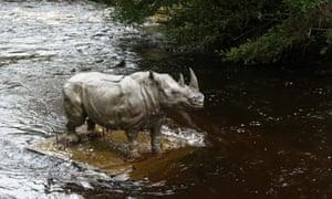 River Dodder Dublin rhino