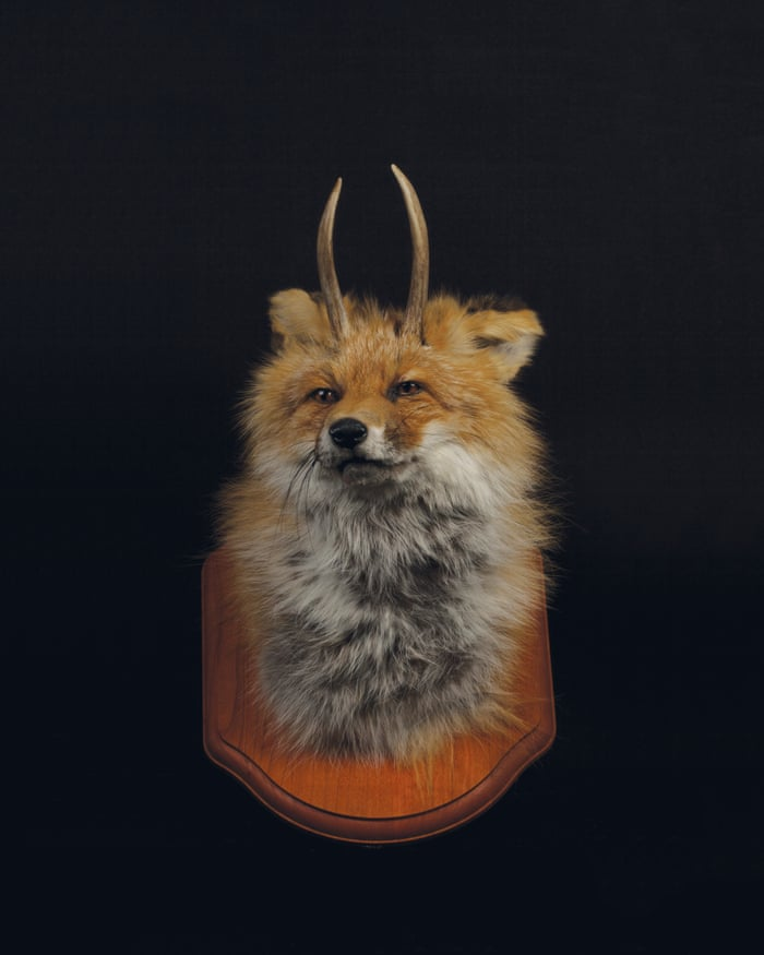 Rogue Taxidermy A Misunderstood Ethical Art Form Or The Next