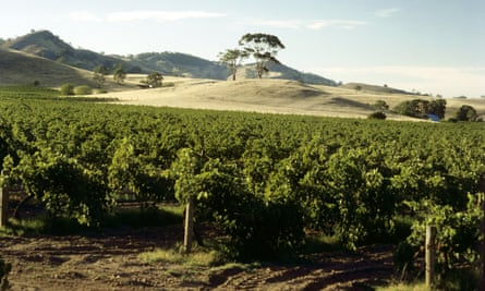 A Vineyard in Barossa Valley, South Australia.