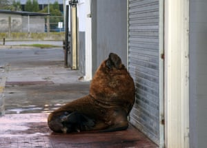 A sea lion is seen on a sidewalk of Mar del Plata harbour, south of Buenos Aires, Argentina, on 16 April.