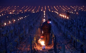 Workers light heaters in vineyards outside Chablis