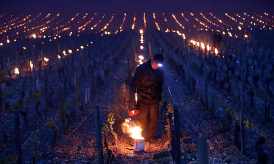 Workers and wine growers light heaters early in the morning to protect vineyards from frost damage outside Chablis.