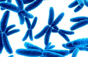 Human x chromosomes, illustration