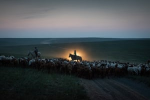Young boys herd goats in the Sukhbaatar region of Mongolia as their father follows in his car, July 2016