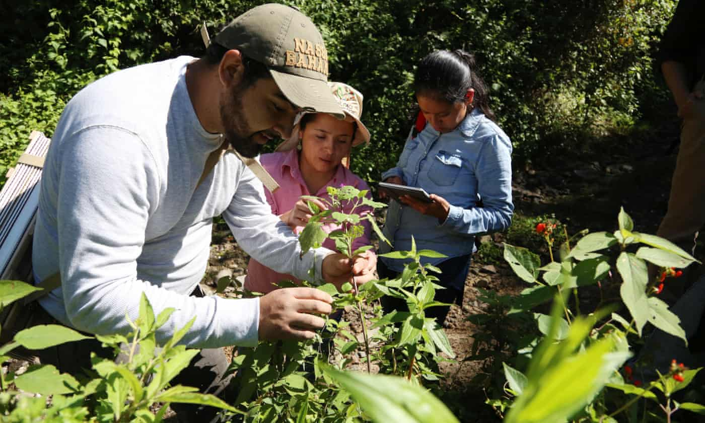 Wild seed collectors turn Indiana Jones in the search for resilient crops