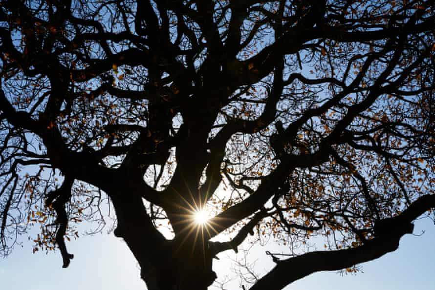 Britain has not planted enough new oaks to replenish timber supplies