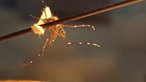 SA mosquito at El Progreso health centre
