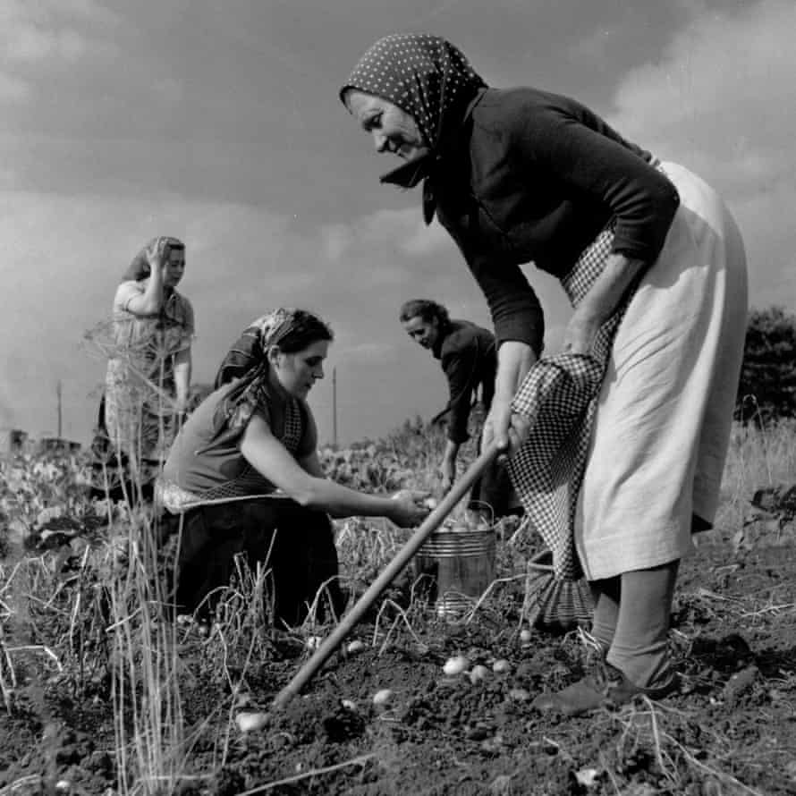 A group of Polish immigrants work at a farm in Gloucestershire in 1955.