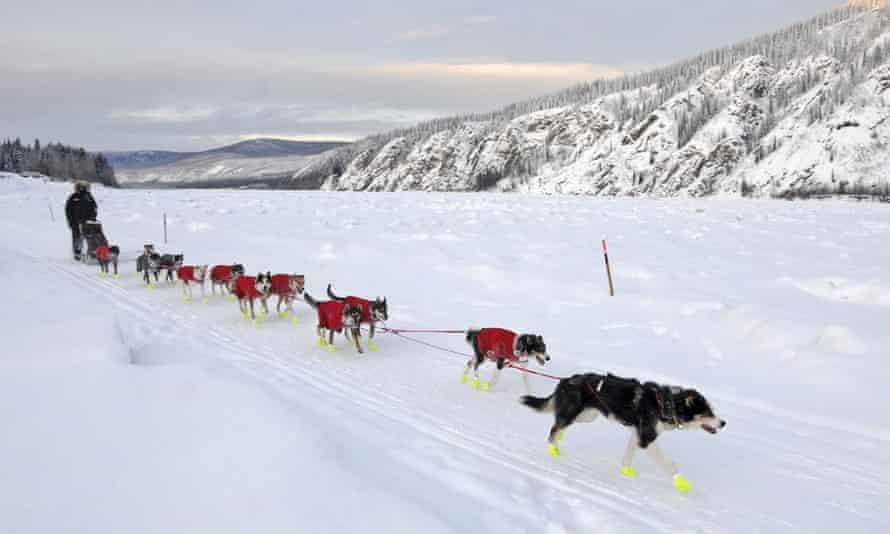 Mushers, such as Matt Hall, pictured, are often sleep-deprived by the time they complete the race and frequently suffer hallucinations.