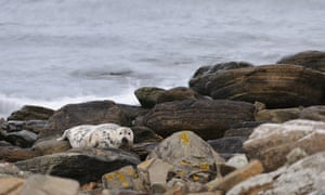 grey seal on rocks