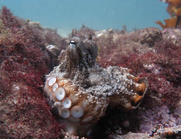 alien intelligence the extraordinary minds of octopuses and other